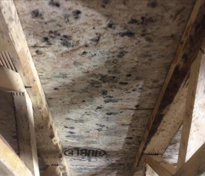 Black mold on plywood and wooden rafters