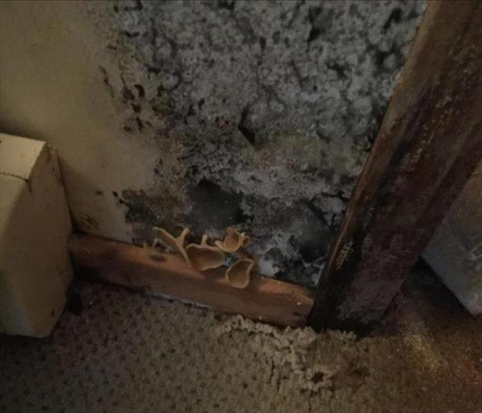 Residential Mold Damage in Bangor Home Before